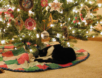 Kitty under the tree