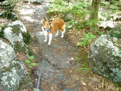 Sawyer on trail