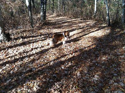 Sawyer woods
